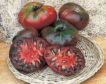 Organic Heirloom Non-Gmo Cherokee Purple Tomato Seeds Rare Beautiful Heirloom black EXTREMELY SWEET!