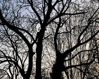 Tree silhouette, symmetry, branches, nature photography