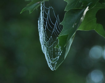 Spiderweb with morning dew.
