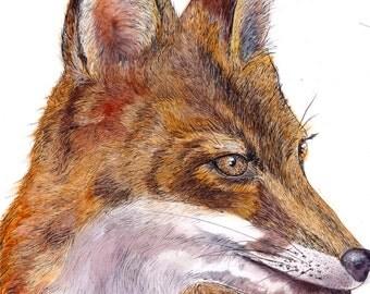"The Fox in Color| 5""x7"" Art Print"