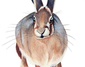 Standing Hare Print
