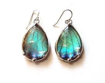 Teardrop shaped Blue Morpho Butterfly Earrings - Real Butterfly Jewelry