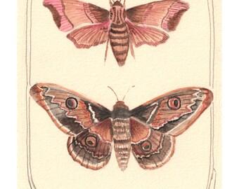 Art Print - Moth Art Print - Print of Watercolor Painting - Wall Art - Moth Wall Art - 8x10 Print - Pink Moth Red Moth