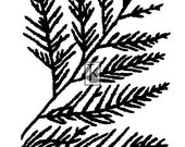 Fern Frond clear stamp Texture
