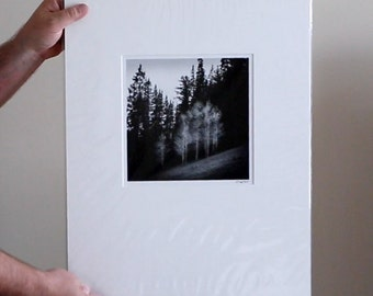 Sunlit Trees - Ready to Frame - Matted and Mounted Landscape Photograph