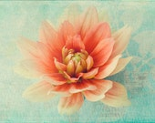 Dahlia Photograph, Coral on Mint, Soft Focus, French Country Home, Flower Photography, Floral Art Wall Decor