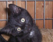 Please help keep our Rescue Kittens Warm this Winter--Animal Rescue
