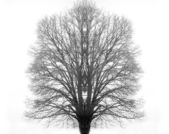 Black and White Tree Art Desktop Background Room Decor Photo Art Dreamscape fantasy - The Mystic Tree - Photographic Art by Sarah McTernen