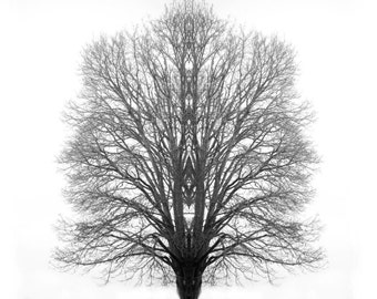 Tree Desktop background Black and White Tree Art Photo Art Dreamscape fantasy - The Mystic Tree - Photographic Art by Sarah McTernen