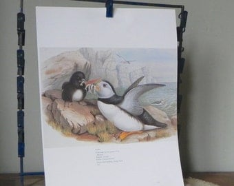 Vintage book plate art plate print of puffin bird feeding its young with fish book plate black white grey rocks cliffs