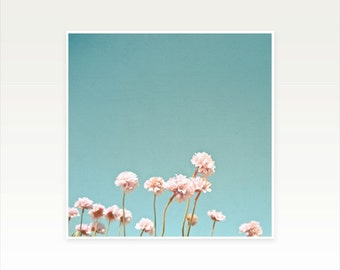 Pink Flower Photography, Clover Flowers, Minimalist Art, Summer Wall Art, Floral, Simple, Blue and Pastel Pink Decor - Clover