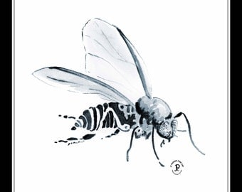 Black Fly - 16x20 Double Matted Decorative Print