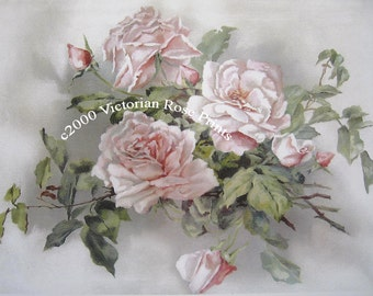 Pale Pink Victorian Cabbage Roses Print Half Yard Long Cabbage Rose Klein