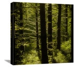 "Forest Nature Photography ""Mossy Forest"" Mossy Green Tree Photograph, Oregon Landscape, Mossy Tree Picture, Wall Decor, Canvas Gallery Wrap"