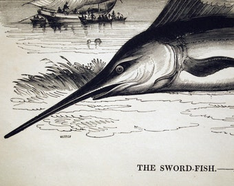 1840s-1850s Antique Engraving of the Swordfish