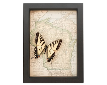 Old Framed Map Wisconsin with Native butterfly