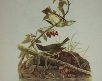 Audubon's Birds of America, Bookplate, 1950, First Edition, 248 Oven-Bird/247 Blackpoll Warbler