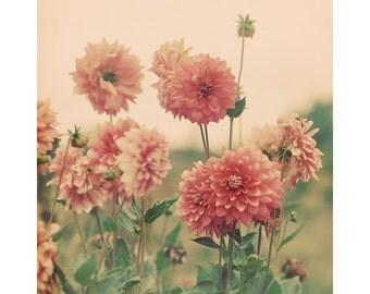 Dahlia Photograph, Flower Photography, Shabby Chic Home Decor, Bedroom Art, Nature, Vintage Colors, Retro, Pink, Peach