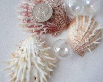 Beach Decor Oyster Shell - Nautical Decor Seashells, Oyster Ducalis - Spiky, Spiny 1PC