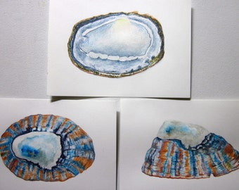 Limpet shells -- set of 3, original paintings, coloured pencil and watercolour wash