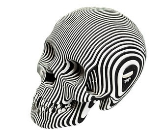 Micro Vince - Cardboard Human Skull - Zebra