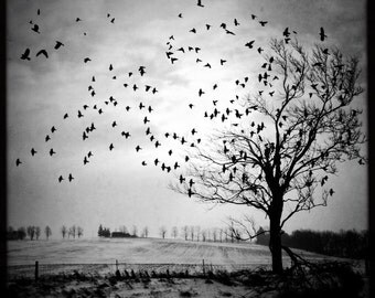 dramatic tree photo, birds flying photo, nature photo, black white landscape, winter tree, birds, flying birds, tree, modern art, Ontario