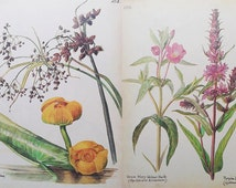 Vintage Book Plate. Vintage Botanical Book Plate. Vintage Paper Ephemera. Vintage book Page 1970's. Drawings from a Naturalists Diary.