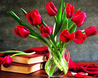 50 Red Tulip Bulbs, Prechilled 'Spring Red' Blend - Great Wedding Favor, Plantable, Ready to Bloom Indoors