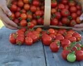 Red Chadwick Cherry Tomato Seeds