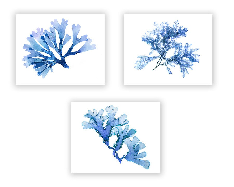 set of 4 blue seaweed - 28 images - set of 4 blue ceramic side plates humble home, blue seaweed ...
