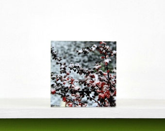 Christmas Decor, Winter Decor, Red Leaves in Snow, Holiday Decorating, Nature Photography,  Photo Block, Small Shelf Art, Wall Art,