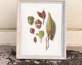 Fall Bits • 8x10 Giclee Print • Leaves Acorns Milkweed Painting • Autumn Art & Decor