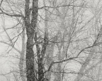 Winter trees photograph, Shades of grey, winter snowstorm, bare winter trees, winter nature photography, new england,  home decor