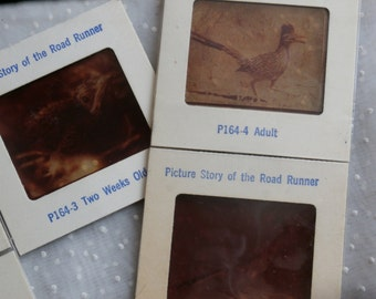 5 Vintage Color Slides - Picture Story of the Road Runner by Petley