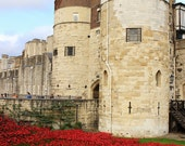Fine Art Photography Blood red poppy poppies, Tower of London, WW1 centenary, 8x12 shown, 8x10 available