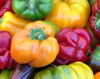 Pepper, Farmer's Market Sweet Pepper Mix Seeds | Delicious Mixture of Sweet Peppers in a Rainbow of Colors