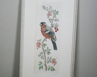 vintage hand colored bird etching signed by artist
