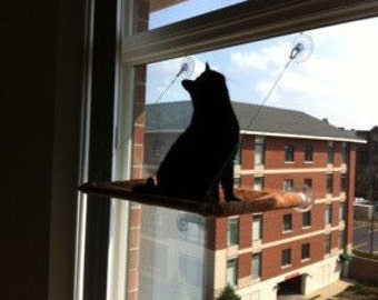 Paisley - Curious Cats Window Perch