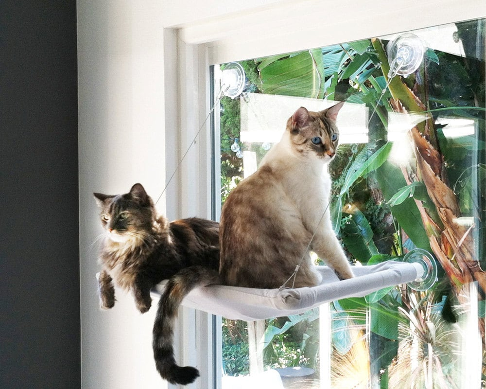 in the pink curious cats window perch. Black Bedroom Furniture Sets. Home Design Ideas