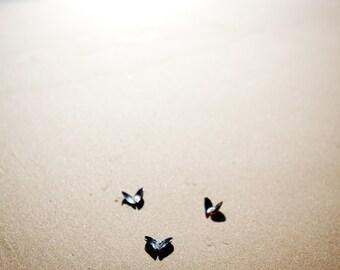 Beach Butterflies - 5x7 Original Fine Art Photograph