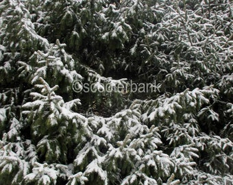 Snow Day Instant Download Digital Photography