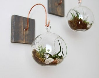 Wood and Copper Mount with Terrarium // Unique Wall Decor // Handmade Home Decor, tillandsia, aerium, plant decor, terrarium, gift, eco