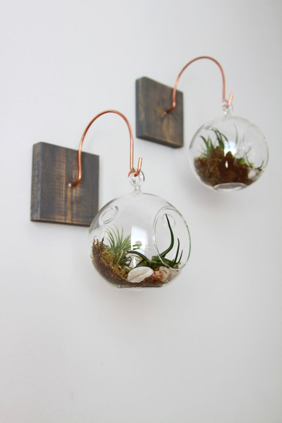 Wood and copper mount with terrarium unique wall decor for Unique wall art