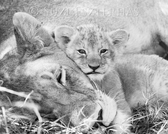 b u00e9b u00e9 mignon animaux lion maman et b u00e9b u00e9 impression noir et