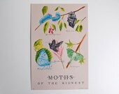Moths of the Midwest – 19 color Letterpress – with Cecropia, Polyphemus, Bluish Spring, Tobacco Hornworm, Luna moths