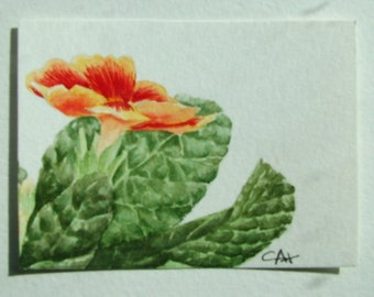 ACEO Original watercolor painting of a Primula.