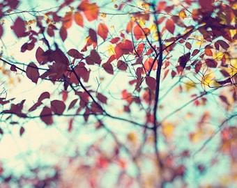 Fall Photo - Fine Art Photography, autumn, leaves, leaf, tree, print, decor, home decor, thanksgiving, aqua, teal, orange, yellow, dreamy