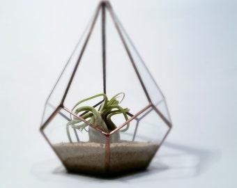 Terrarium / Geometric Glass Teardrop Terrarium / Minimalist Planter