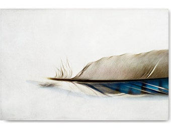 Feather photo, feather art, nature photo, wall art, nature print, blue jay feather, feather photography, feather print, feather art print