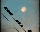 Starlings & Moon, birds on a wire, moon photo, line of black birds and moon in blue sky, telegraph pole, square photograph print